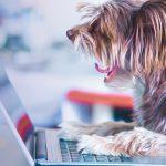 Pet Grooming Software01